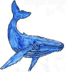 baleine3