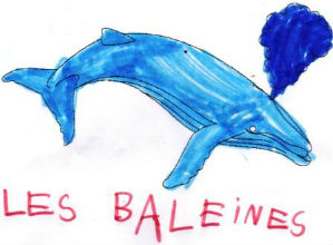 baleine1
