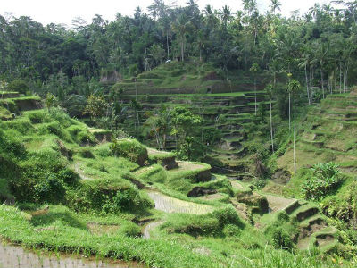 Indonésie 2008 21