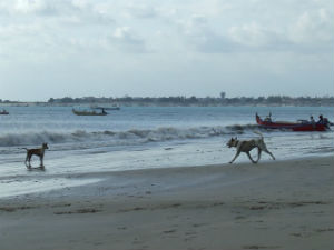 Indonésie 2008 7